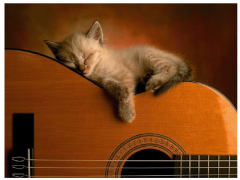 sieste chat  guitare.png